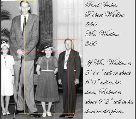 Robert Wadlow, human freak. 9 feet 2 inches tall!