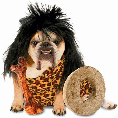 The CUTEST Halloween COSTUMES for DOGS 2013!