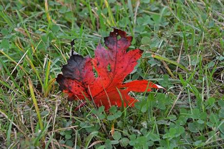 Wordless Wednesday - The leaves of autumn