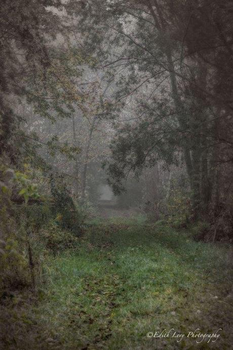 forest, mist, fog, Ontario, mysterious, trees, path, nature, landscape