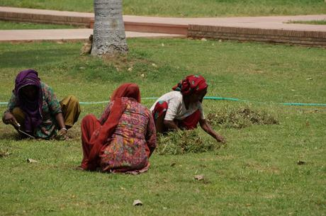 Women hand cutting the lawn