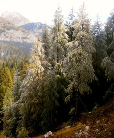 frost on trees in Triglav National Park