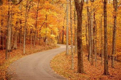 Enjoy the fall colors!