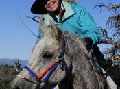 Stable Horses Keep Weight Customer Story