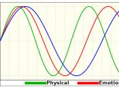 Biorhythms Life Cycles