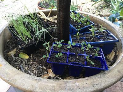 Five garden jobs you can do this spring
