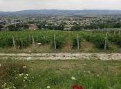 Trip Assisi Tili Vini Family Organic Winery