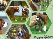 Love Dogs: August National
