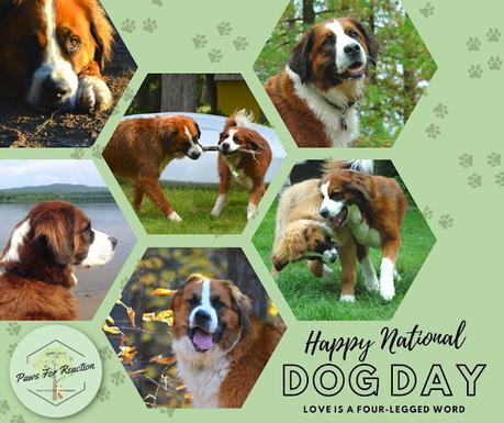Happy National Dog Day Saint Bernese dogs Paws For Reaction