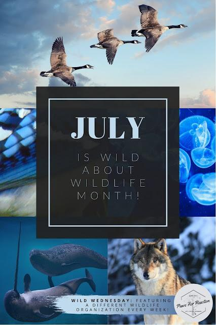 Thank you for celebrating Wild About Wildlife Month: Wild Wednesday raised awareness about local wildlife conservation