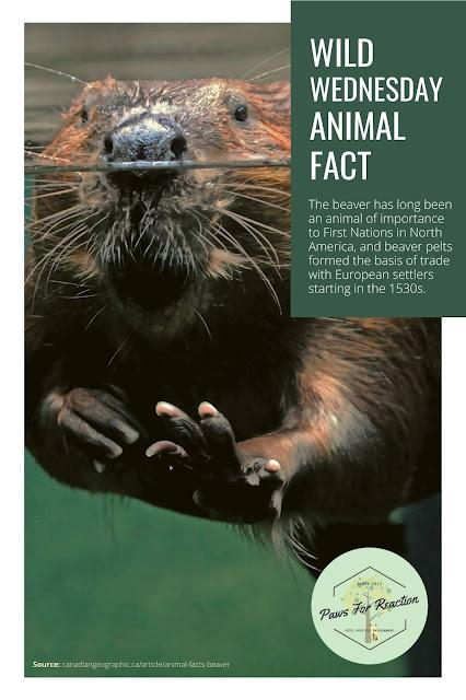 Wild About Wildlife Month: Thank you for supporting wildlife rescue Beaver animal fact