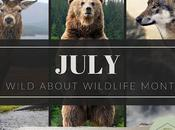 July Wild About Wildlife Month: Featuring Aspen Valley Sanctuary #WildWednesday