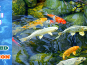 """Don't """"Koi"""" With Pond Leaks"""