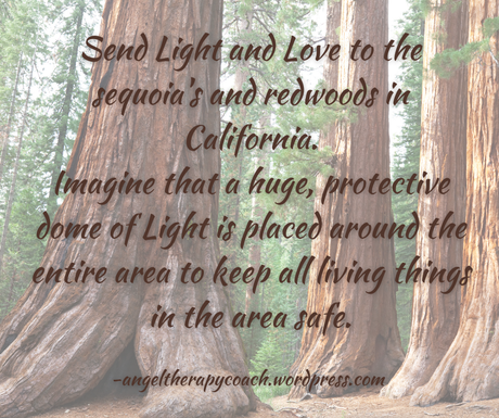 Lightwork for the sequoia trees