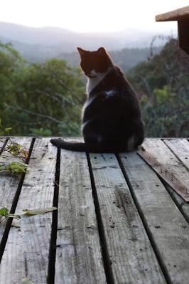 Corycat Enjoys the Sunrise