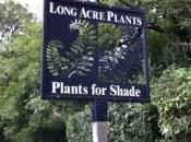 Long Acre Plants