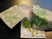 Growing Winter Greens