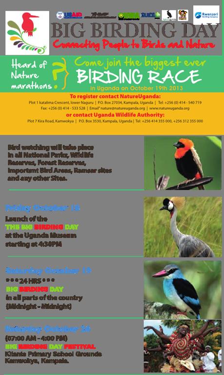 How to take part in Big Birding Day 2013, Uganda