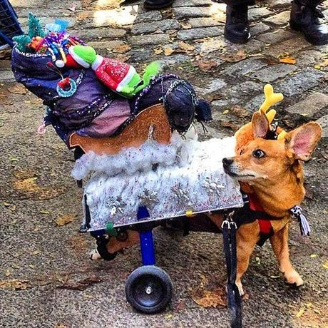 Creative Halloween Costumes for Disabled DOGS!