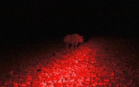 Rhino seen on a night drive in Etosha National Park in Namibia.