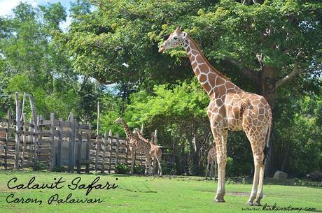 essay on african safari