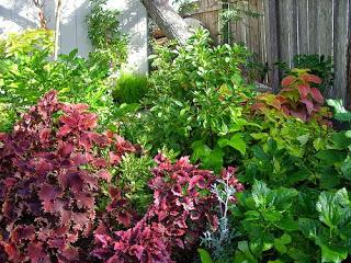 Making Your Garden Come Alive with Striking Colors