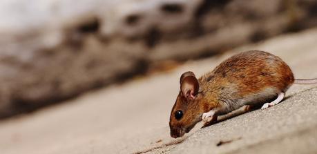 Save your Home from Pest Invasion with Exemplary Tips for Safety