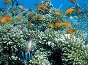 Citizens Meet Coral Gardening