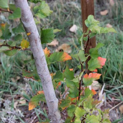 Tree Following & other news from the yard