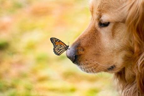 Afbeeldingsresultaat voor dog and butterfly