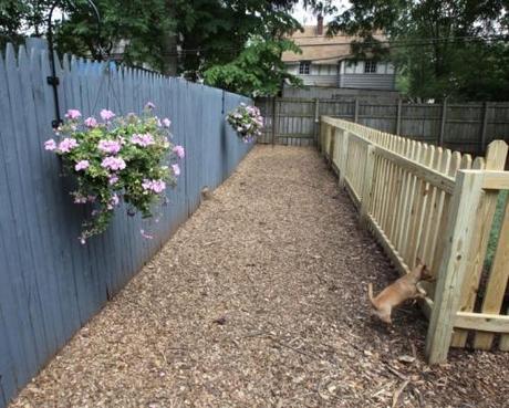 Colorado Dog Friendly Fenced Yard