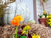 Harvest Outdoor Decor