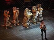 Huge Victory! Wild Animals Circuses into Effect 2015
