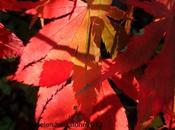Autumn Arrives Garden