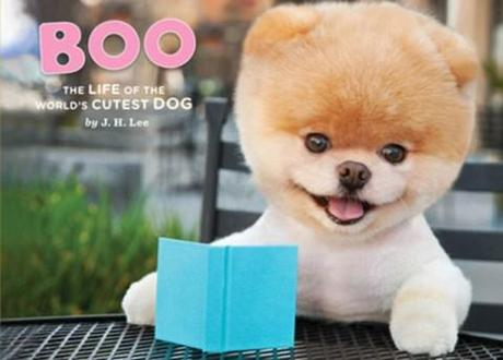 Meet Boo, the world's cutest dog (who has 1.8 million Facebook fans and a book deal)