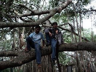16) Manchinbele & Big banyan Tree (The reunion) :7/7/10