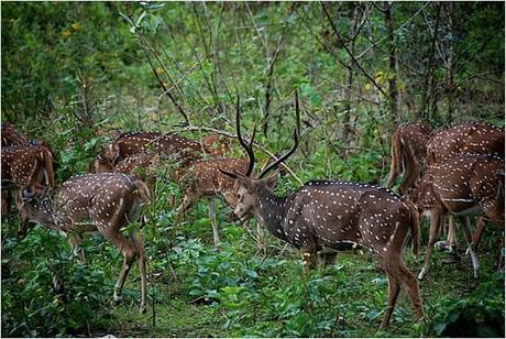Wildlife in Coorg