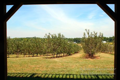 Highland Orchard: Greensburg, Indiana View