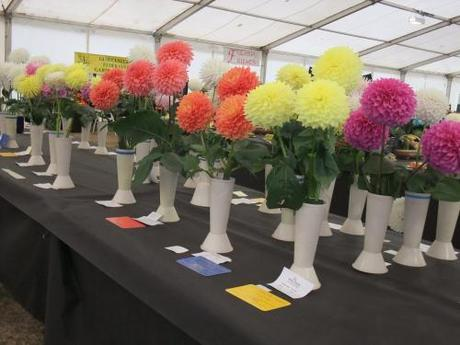 Wordless Wednesday – Images of Malvern Autumn Show