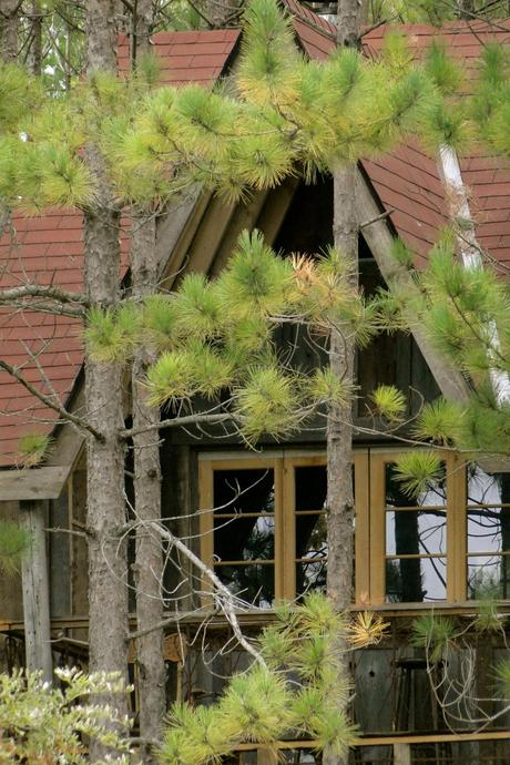 IDEAL WORLD : Everyone should have an adult tree house