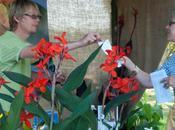 Great Dixter Plant Fair