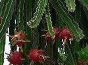 Plants That Look Extraterrestrial