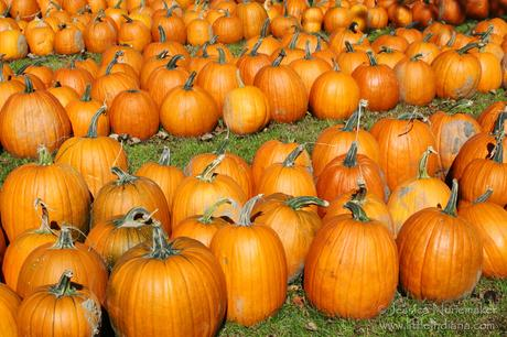 Lowell, Indiana: Norm's Pumpkin Patch