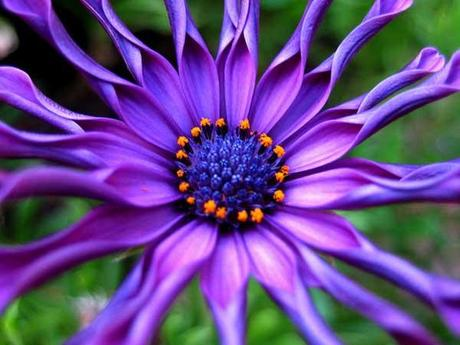 Amazing Pictures Of Flowers 23
