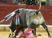 Bullfighter's Face Skewered Half Bull