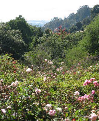 UC Botanical Garden, Berkeley:  A Plant Lover's Paradise