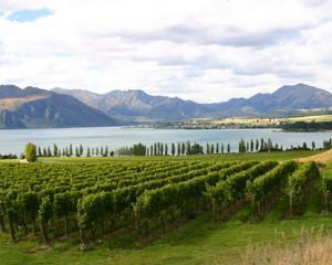 Honeymooning in New Zealand and not a rugby ball in sight!