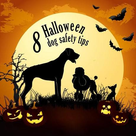 INFOGRAPHIC: 8 TIPS to Keep Your DOG Safe this Halloween!