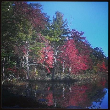 Great start to #October #fall #autumn #NewEngland #nature