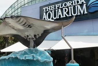 The Florida Aquarium Tampa Bay S Exciting Way To Spend A